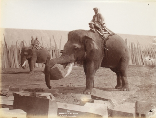 Elephant at work - Rangoon, Burma