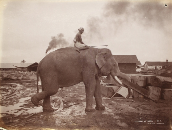 Elephant at work - Rangoon